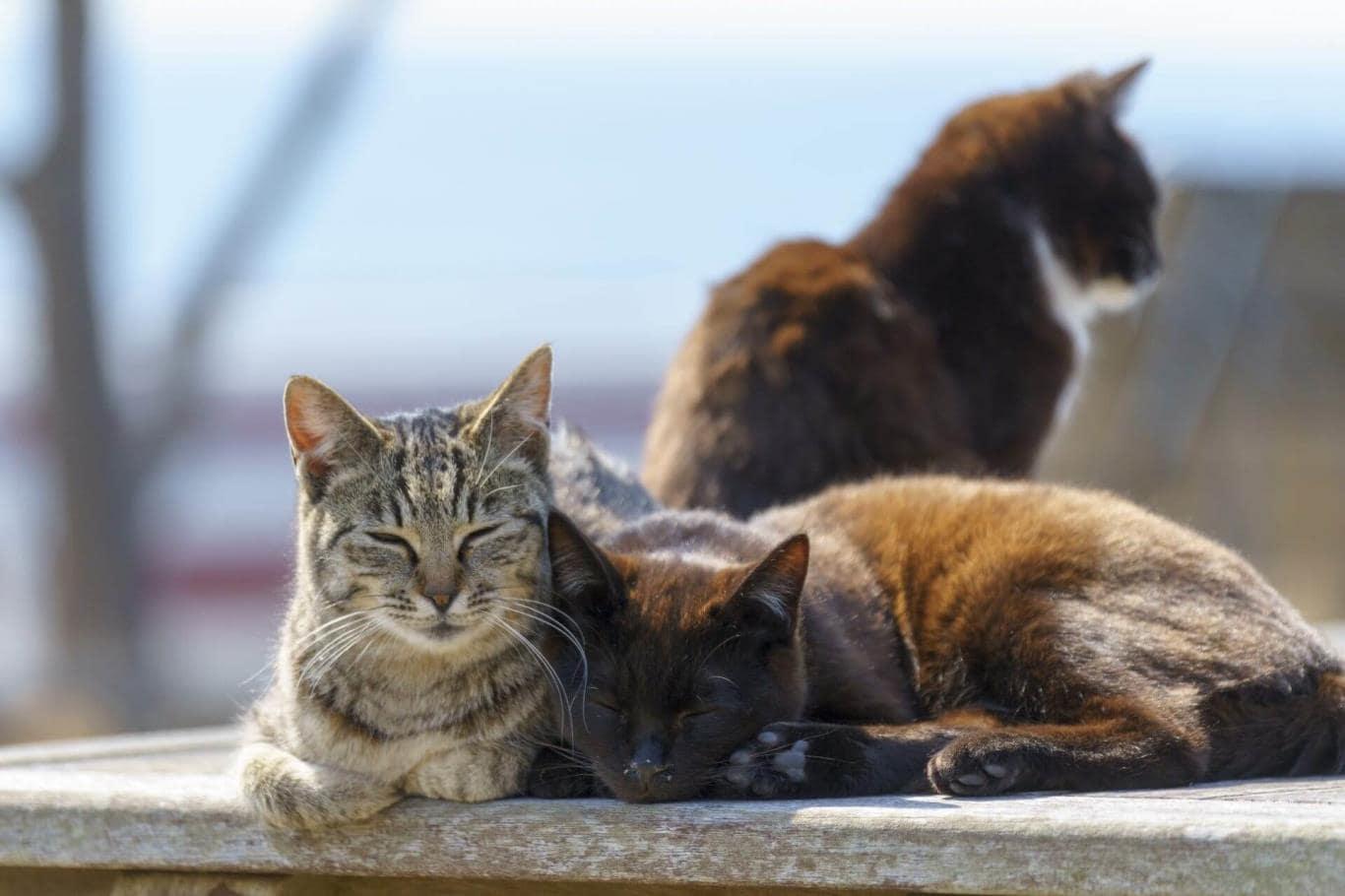 Love cats - Unique Japanese Culture